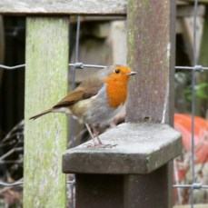 Day 2 - Good morning Mr Robin