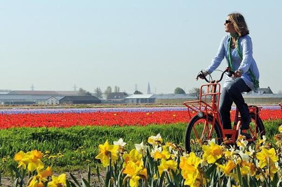 cycling-in-holland-a.jpg